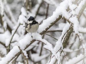С серьезных морозов начнется рабочая неделя в Новосибирске
