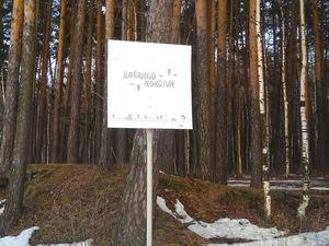 Шарташский лесопарк закрывают на карантин