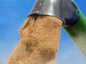 Завод по глубокой переработке зерна построят в Шарыпове к 2024 году