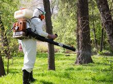 Дезинфекцию парков и скверов Новосибирска проведут безопасным веществом