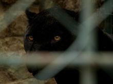 Нет денег ни на людей, ни на зверей. В Нижнем Новгороде зоопарк разоряется из-за пандемии