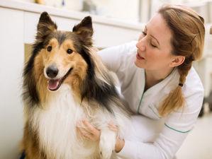 Владельцев застрахованных собак и кошек будут удаленно консультировать ветеринары