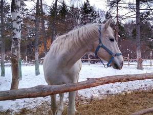 Конному клубу в Челябинске не хватает денег на корм лошадям