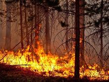 Создание лесопожарного центра в Красноярском крае обсудит Совбез РФ