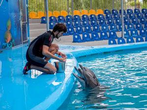 Новосибирскому дельфинарию выдадут 10 миллионов финансовой помощи