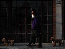 Молчали и запасались лекарствами: почему Китай хранил тайну о смертельном вирусе