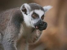 Новосибирский зоопарк попросил финансовой помощи у горожан