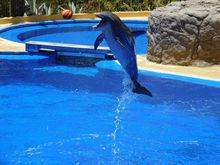 Снова заработал новосибирский океанариум и дельфинарий