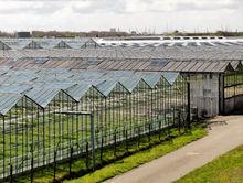 Новый тепличный комбинат для выращивания огурцов и салата построят в регионе