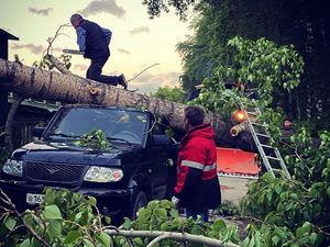 Из-за сильного ветра на машину упало дерево. Что делать и кто должен оплатить ремонт?