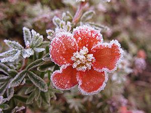 Красноярск соскучился по традиционным майским заморозкам