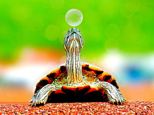 Замедляйтесь. Что делать, если современный темп жизни сводит с ума