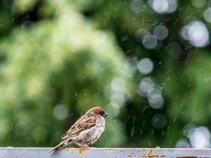 Дожди и небольшое похолодание придут в Новосибирск к концу недели