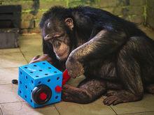 Российские зоопарки попросили помощи. «Роев ручей» рассказал о гигантских убытках