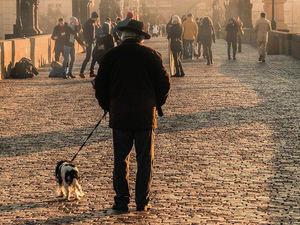 Домашних животных социально незащищенного населения Красноярска стерилизуют бесплатно