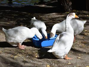 Еще 22 миллиона выдадут новосибирскому зоопарку на корм животным