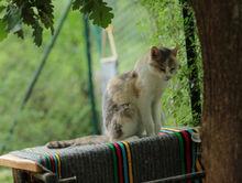 В Челябинске стали реже забирать бездомных животных с улицы