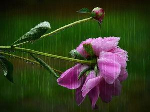 Дождливая и теплая погода ждет новосибирцев на выходных