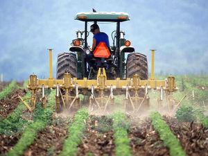 Почти 40 миллионов финансовой помощи получат 10 новосибирских фермерских хозяйств