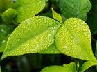 Дожди прекратятся в Новосибирске во второй день выходных