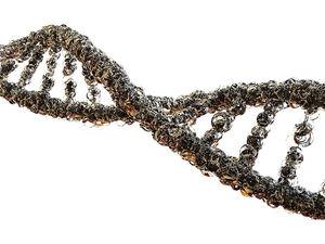 Инвестпроект по созданию «Генетических технологий» запустили в Новосибирске