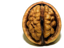 Запоминать быстро и надолго. Нейрофизиологи поняли, что нужно мозгу