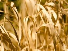 В Челябинской области объявляют ЧС из-за засухи