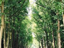В Челябинске выявлено 249 погибших деревьев и кустарников