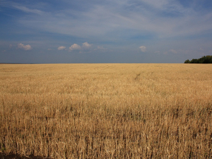 В Челябинской области введён режим ЧС