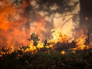 Мишустин распорядился выделить допсредства на тушение лесных пожаров в Красноярском крае