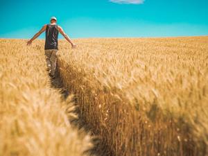 Семейные фермы Красноярского края поддержат из бюджета