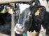 Коровы онлайн. Зачем аграриям Нижегородской области «Умная ферма»?