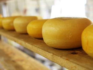 Предприятия Красноярского края нарастили объемы производства сыра и мяса