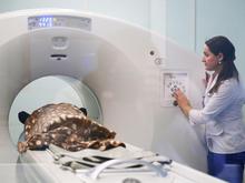 В Нижегородской области появится центр диагностики онкозаболеваний методом ПЭТ/КТ