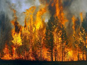 Площадь лесных пожаров в Красноярском крае за выходные выросла втрое