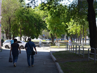 Московские эксперты проведут ревизию старых деревьев в Челябинске