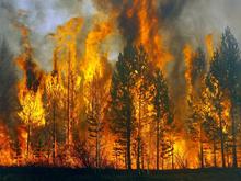 Авиалесоохрана: две трети площади лесных пожаров сейчас приходятся на Красноярский край