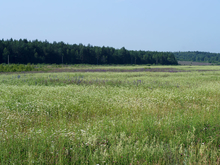В Челябинской области фермеру пригрозили проверкой из-за заброшенного поля