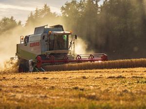 «Если погода не подведет» — урожай зерновых в Красноярском края может оказаться рекордным