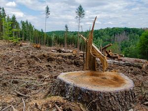 Власти Красноярского края договорились совместно бороться с экологическими преступлениями