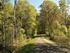 В Челябинске уничтожили деревья  и лыжную трассу из-за незаконной дороги к коттеджам