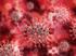 Коронавирусом в мире заразились более 30 млн человек. Россия на четвертом месте