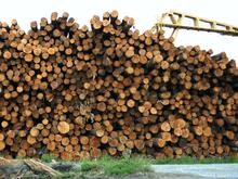 Новые производства по переработке древесины запустят в регионе в этом году