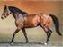 В конном клубе под Челябинском украли чистокровных лошадей