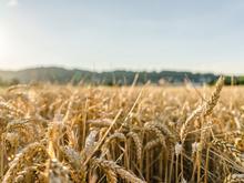 Красноярский край потратит на развитие сельского хозяйства более 8 млрд рублей