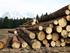 Путин призвал бороться за российский лес. Эксперты прогнозируют рост беззакония на рынке