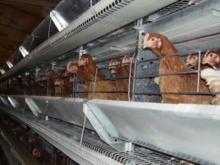Замгенпрокурора попросил Косилова перенести птицефабрику, от которой задыхаются жители