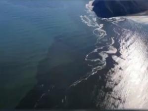 Экокатастрофа на Камчатке: утечка химикатов, в океане погибли сотни тысяч животных