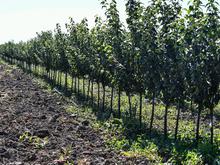 Чувашский садовод подарил Челябинской области 75 тыс. саженцев в честь юбилея Победы