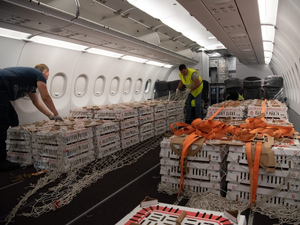 «Уральские авиалинии» получили разрешение на международные грузовые рейсы из Екатеринбурга
